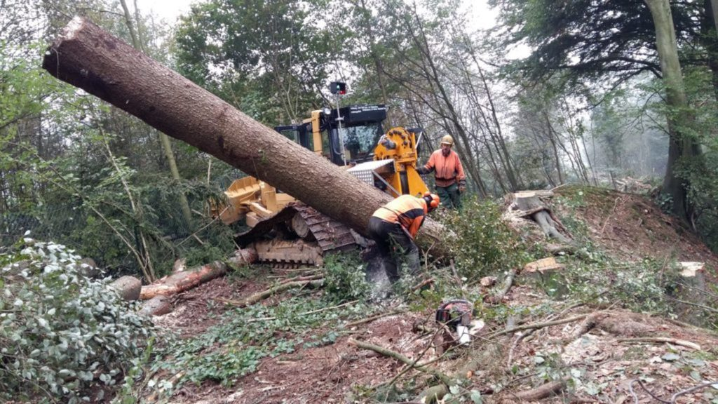 Forstbetrieb Haas